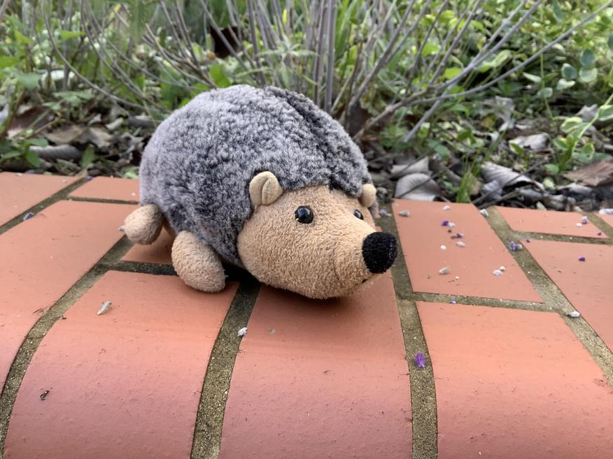 Spike belongs to Hedgehog Class
