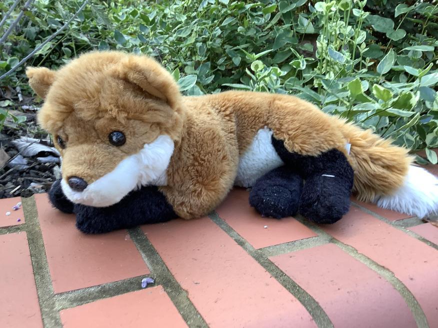Foxy belongs to Fox Class