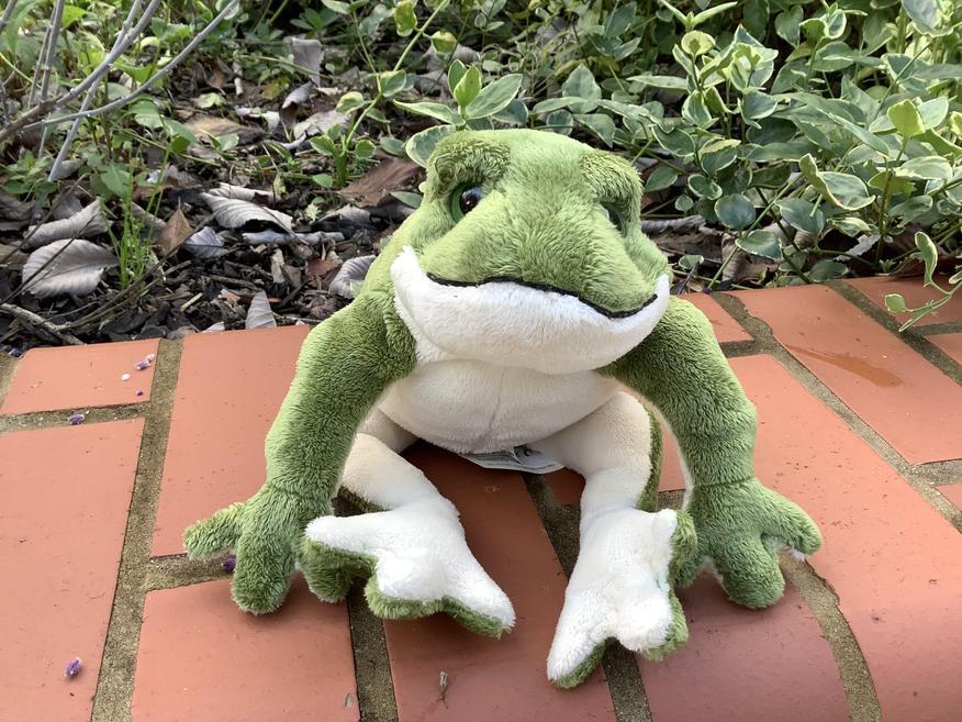 Froggy belongs to Frog Class