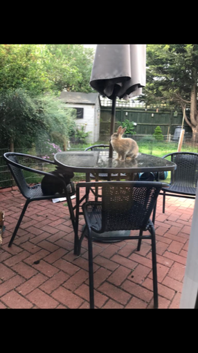 Posh bunnies use tables and chairs