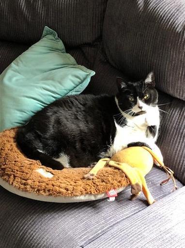 Queen Suki sat on her throne.