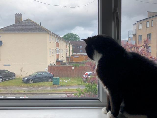 Lily spots some sneaky seagulls outside