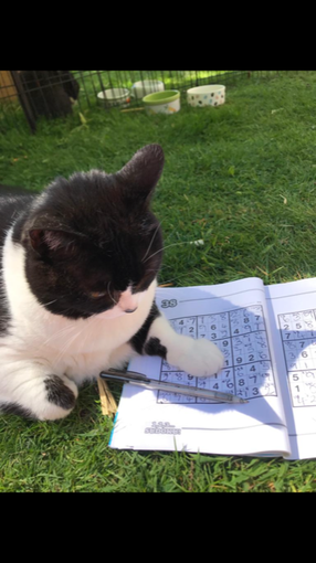 Suki loves Sudoku!