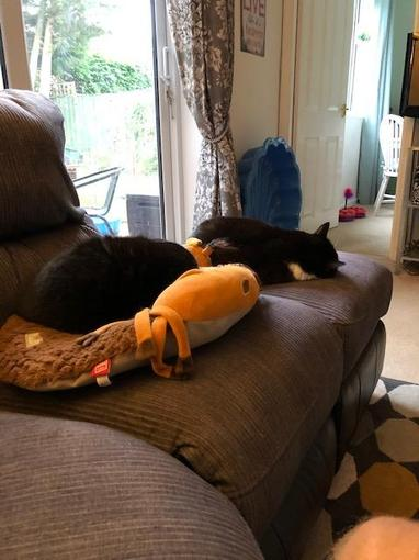 Lily and Suki rest after a long day of 'Fox watch'