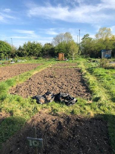 A much improved allotment in April 2020