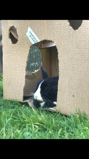 Why do animals love cardboard boxes?!