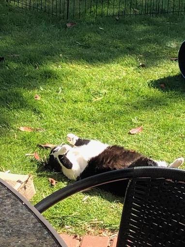 A sunbathing Suki!