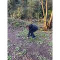 Alfie exploring in a wood