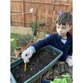 Edo planting his flowers