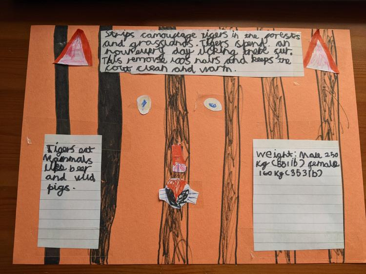 Facts about tigers by Ella