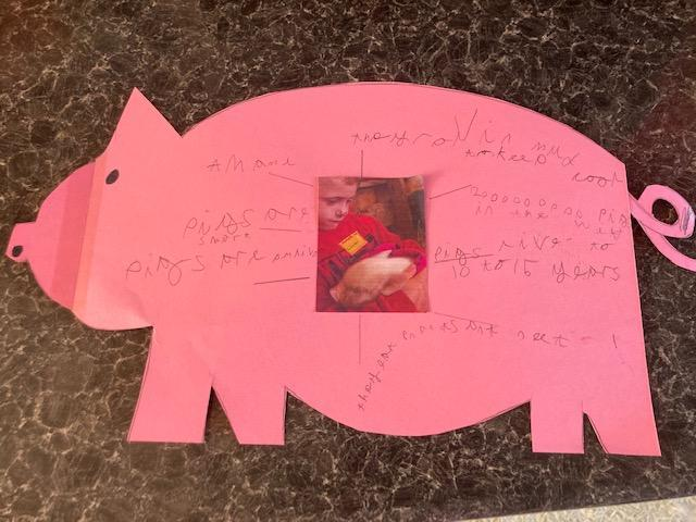 Facts about pigs by Lincoln