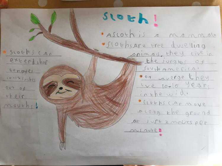 Facts about sloths by Darcy
