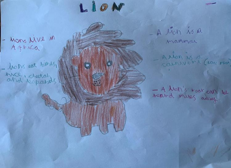 Facts about lions by Ralphie