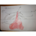 Oscar's brilliant volcano cross-section drawing