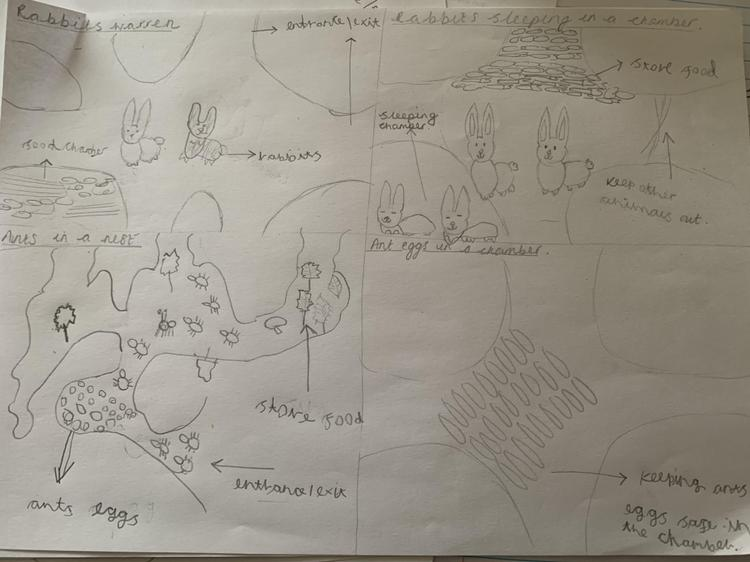 Ralphie's fabulous diagrams of a rabbit's warren and an ants nest!