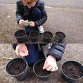 Freddie planting his seeds