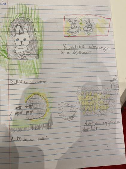 Alvin's fantastic drawings of animal habitats!
