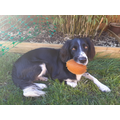Lauren's dog, Woody and his chew toy!