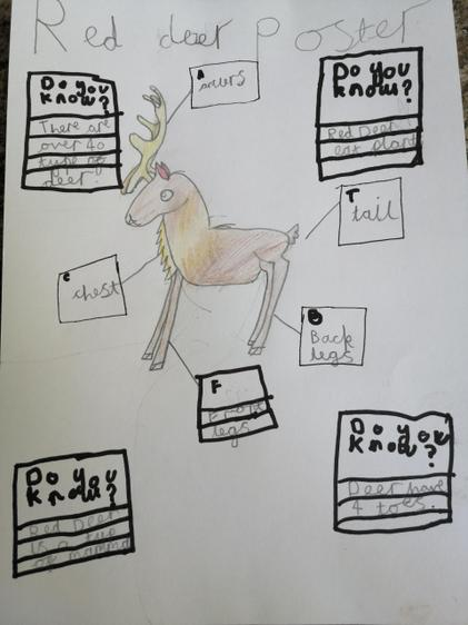 Facts about deer by Martha