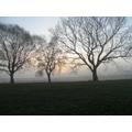 Enjoying the sunrise on a frosty morning