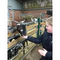 We enjoyed feeding the goats