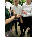 We got to see a snake close up