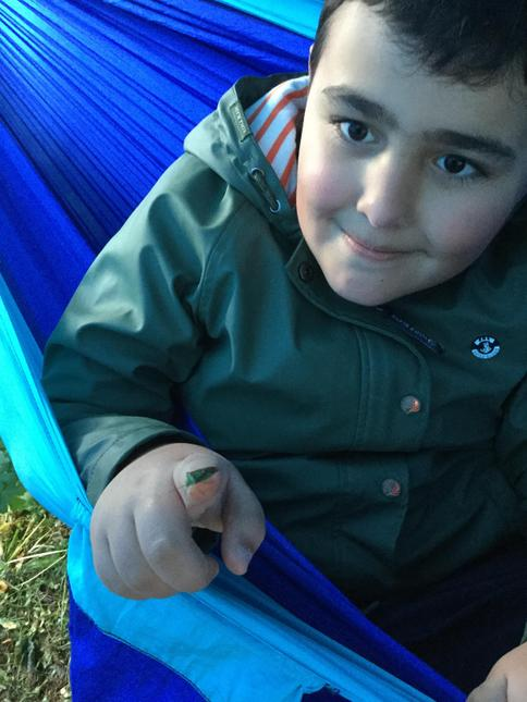 Finding a shield bug.