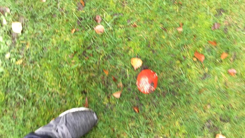 Fly agaric. Look but don't touch.