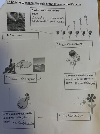Well done for completing the seed life cycle!