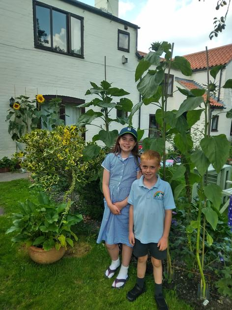 A giant at 216.5cm tall from the ground to the top of the plant!