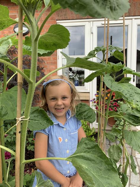 Edie's tallest sunflower currently stands at 120cm. Wow!