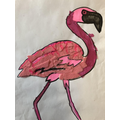 Willow (Y4) - Flamingo - South America