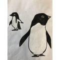 Maple (Y1) - Penguin - Antarctica