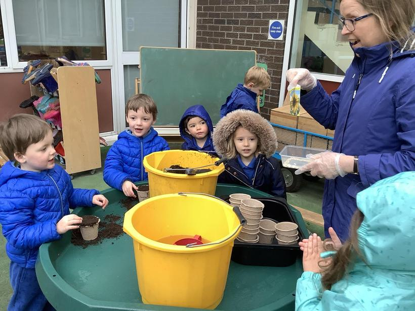 We planted some sunflower seeds for the bees