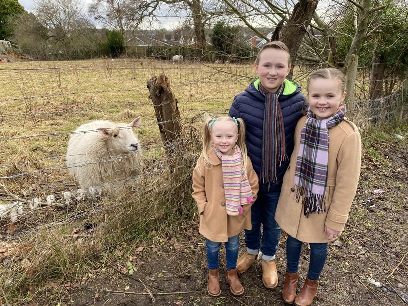 Saying hello to the sheep!