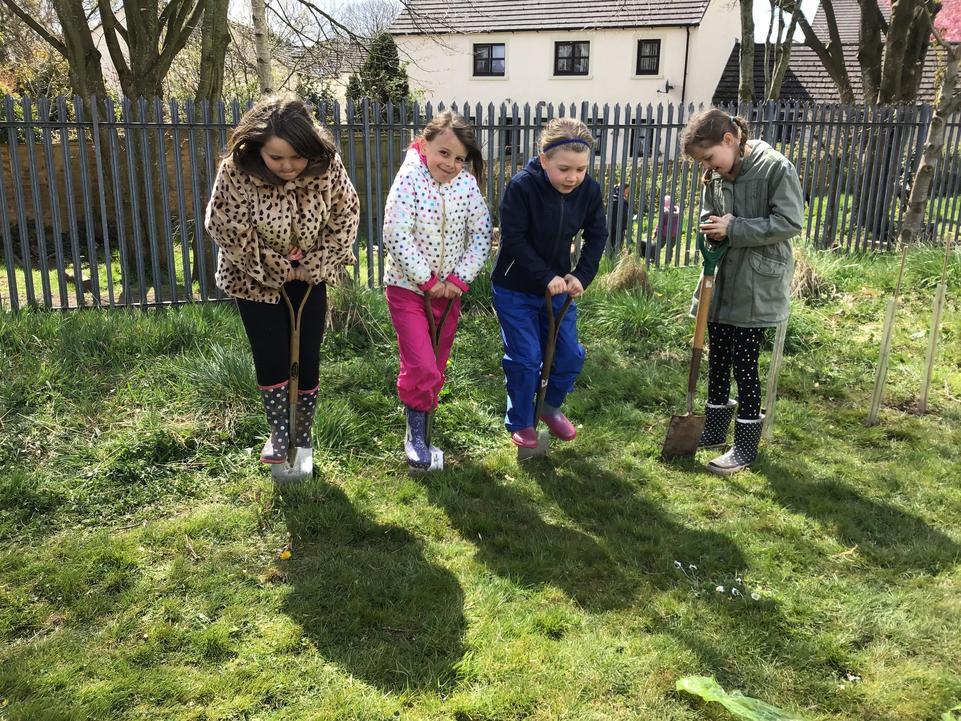 Planting trees for habitats