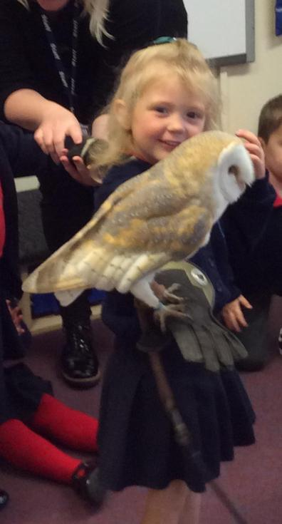 Woody the barn owl