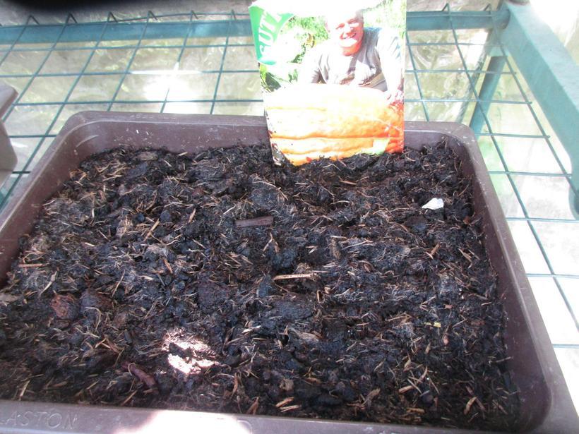 Pumpkins take longer to germinate