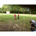Collecting sycamore seeds-'helicopters'.
