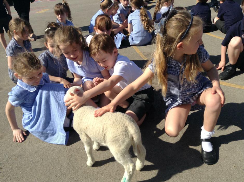 Meeting a lamb