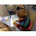 Peeling lemons