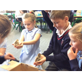 Baby chicks come to visit Y3C