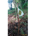 our leaf print flags