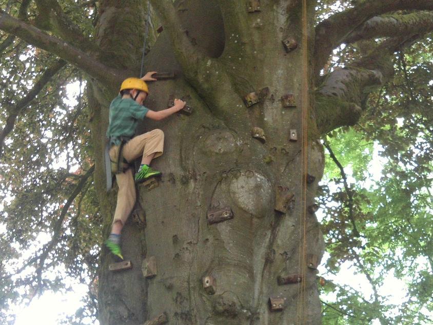 Good tree climbing.