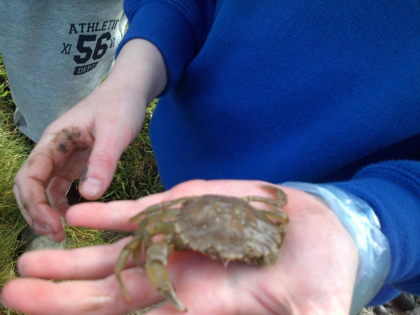 A Crab!