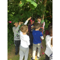 Forest schools and Art - Tree weaving (12).JPG
