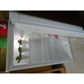 Science - What do plants need to survive?