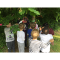 Forest schools and Art - Tree weaving (14).JPG