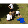 Science investigations with plants