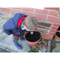 Bulb planting.